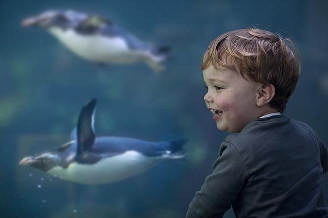 Cape Town Etc|Two Oceans Aquarium