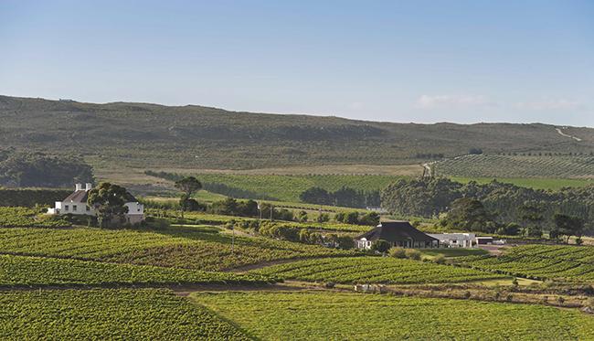 Bouchard Finlayson - Farm