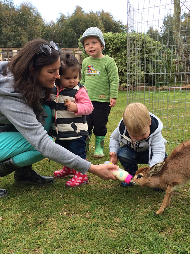 Cape Town Etc|Arolela Farm