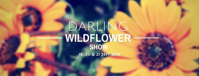 DARLING WILDFLOWER SHOW