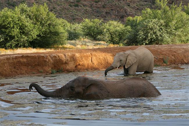Sanbona-elephants