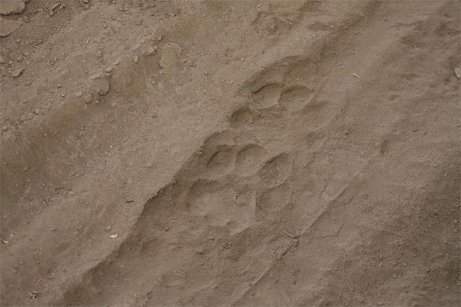 Sanbona-footprint
