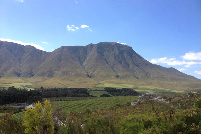 The Upper Hemel-en-Aarde Valley viewed from ELL Eatery, a beautiful 20-minute drive from Hermanus
