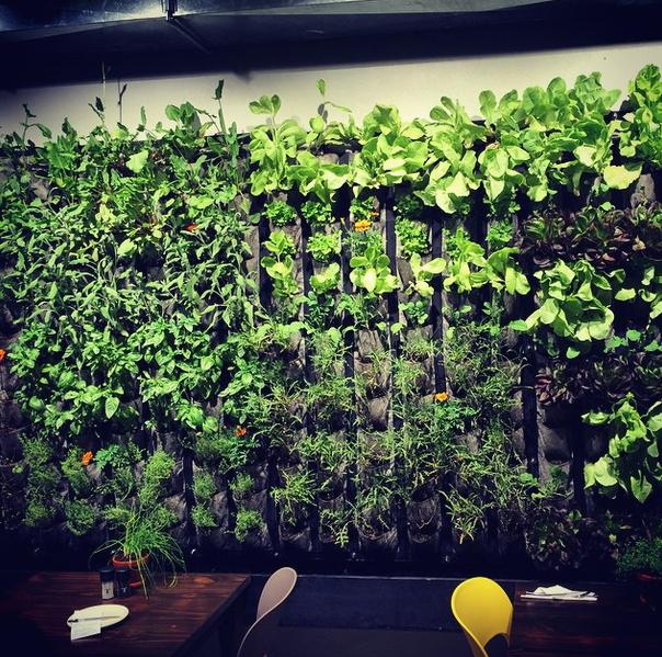 Graze Vertical Garden