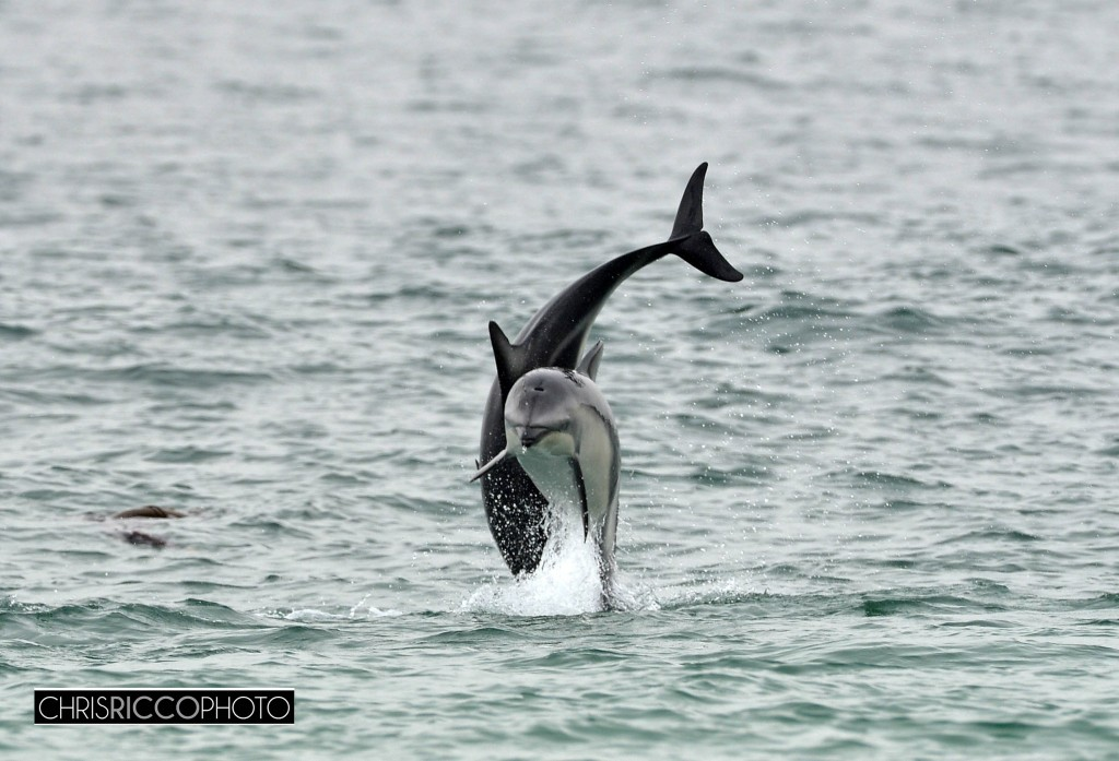 Cape Town - must love dolphins