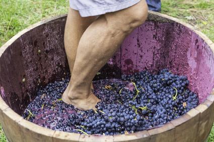 Weintaufe Eikendal