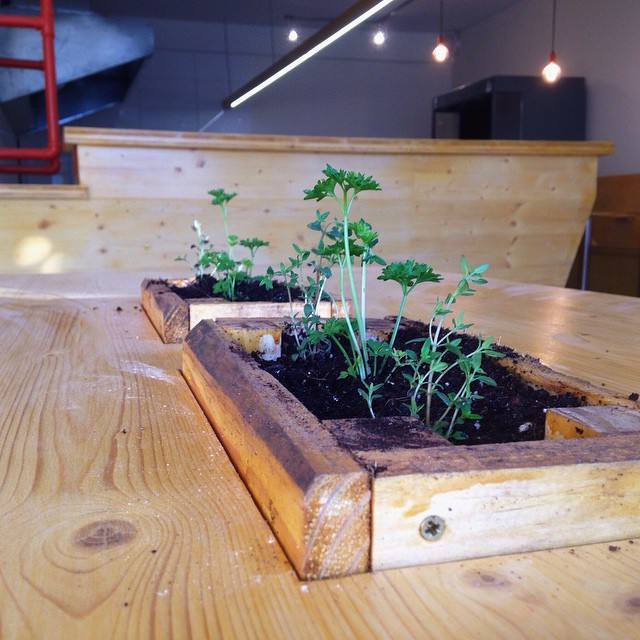 Herbs have been planted into the tables at IYO.