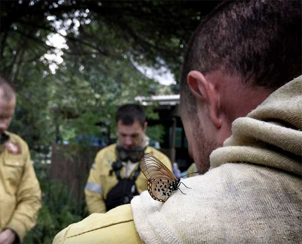Firefighter-with-butterfly