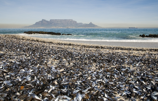 TOP 10 TRAVELLERS' CHOICE DESTINATIONS IN SOUTH AFRICA REVEALED