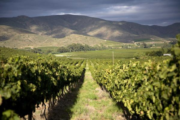 Robertson winelands