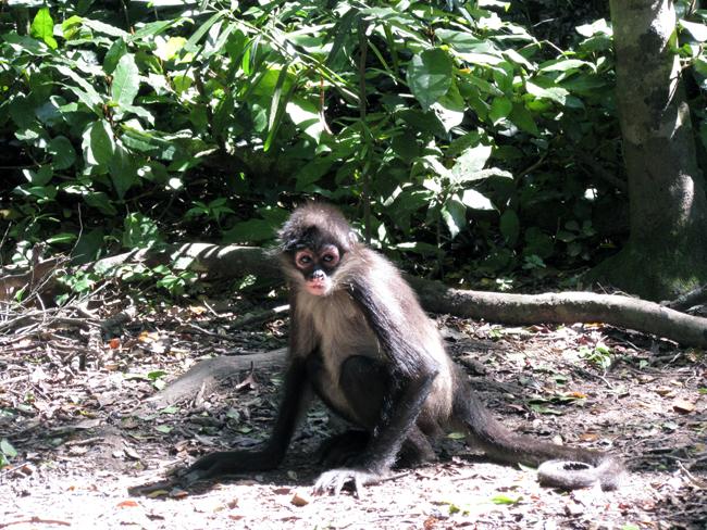 Monkeyland Plett
