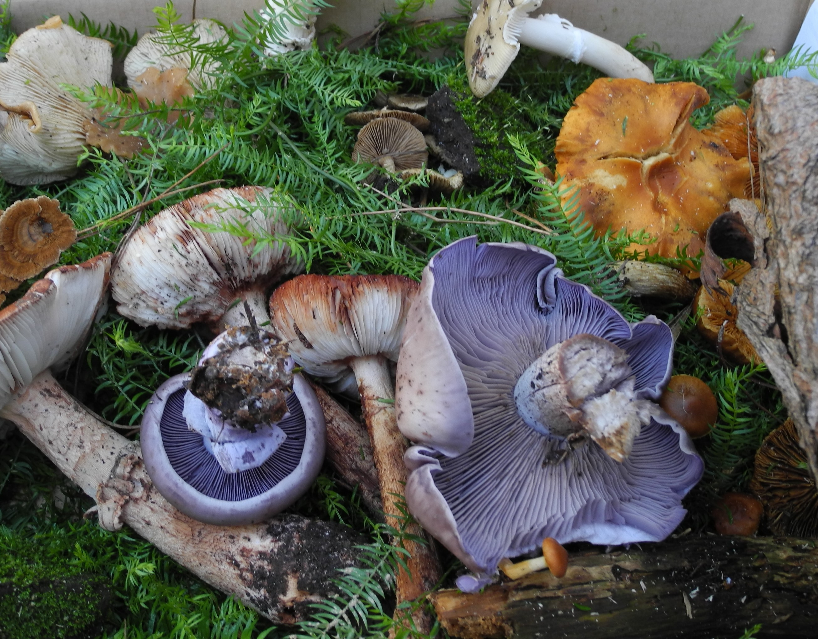 Mixed-wild-mushrooms