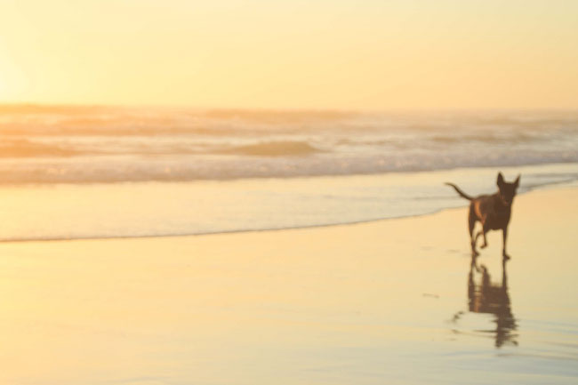CITY TO CLAMP DOWN ON DOG FRIENDLY BEACHES