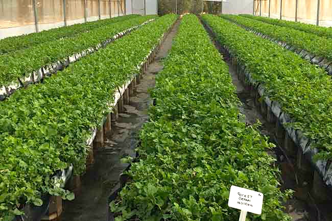 A MORNING IN ALLEE BLEUE'S HERB TUNNELS