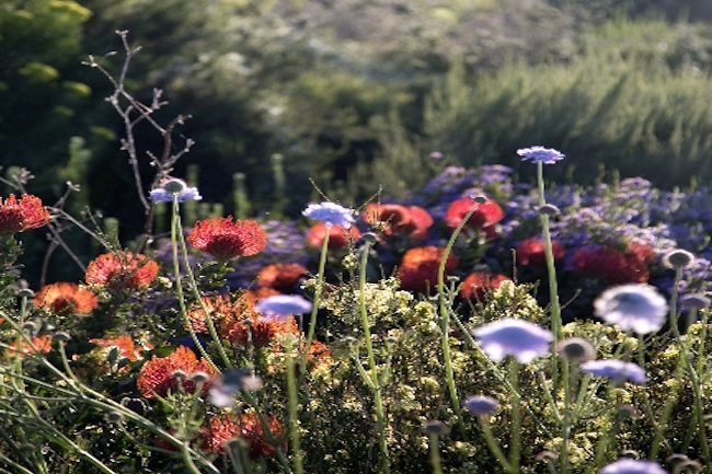 OUR FYNBOS SOIL COULD GIVE THE WORLD A NEW ANITBIOTIC