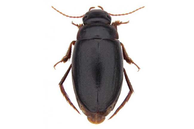 NEW TYPE OF BEETLE DISCOVERED IN CAPE TOWN IS KIND OF A BIG DEAL