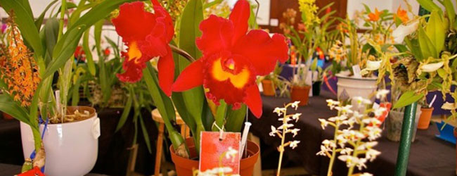 CAPE ORCHID SOCIETY AUTUMN SHOW