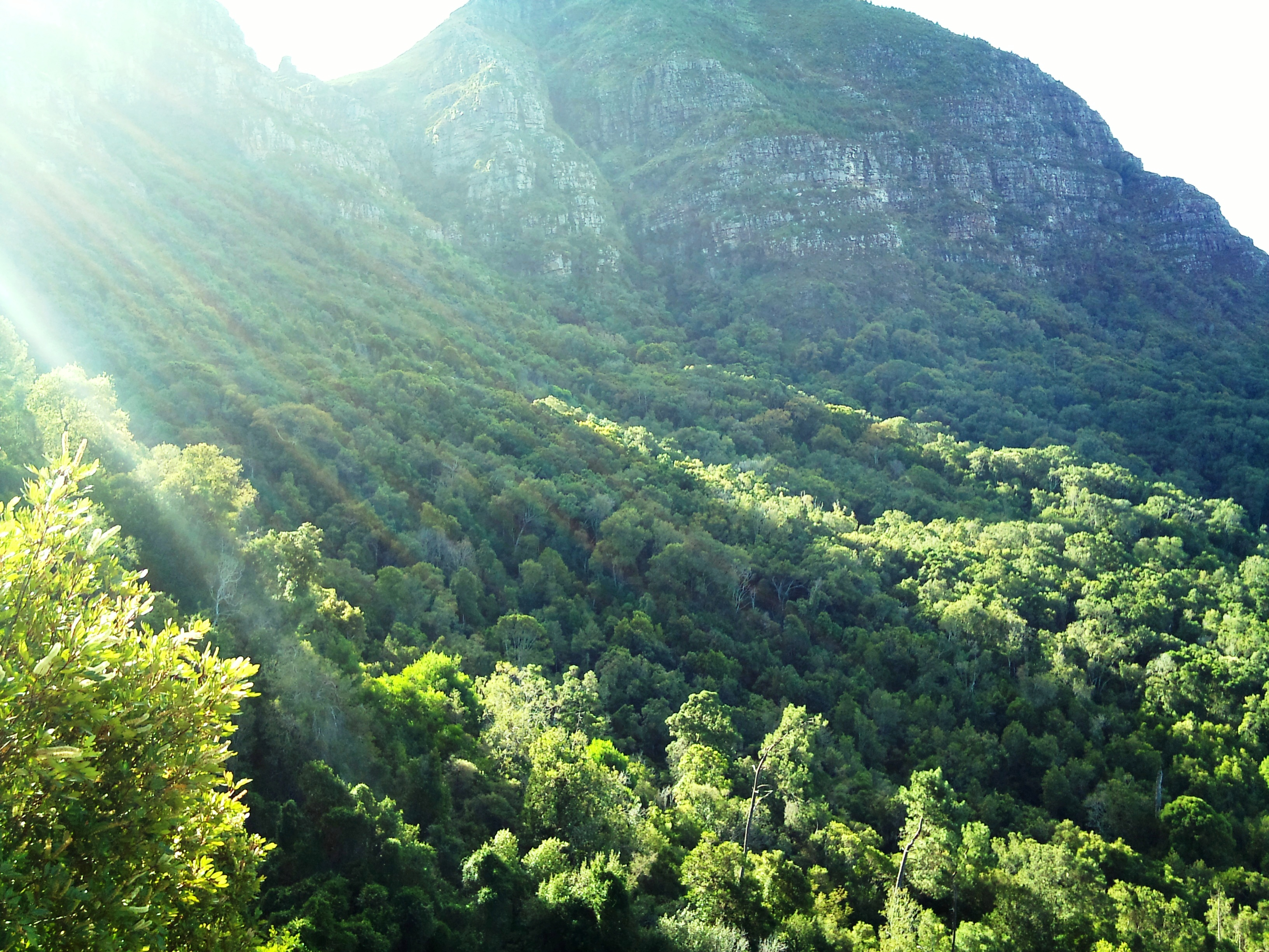 Newlands_Forest_and_Devils_Peak_-_Cape_Town_-_SA