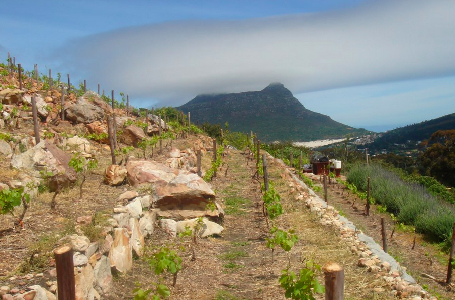 Back when it all began: the location of what would become Hout Bay Vineyards.