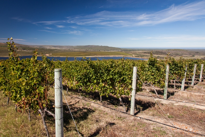 These vineyards make up one of the oldest viticultural soils in the world that once belonged to Antarctica.