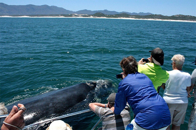 WHALE WATCHING WITH IVANHOE SEA SAFARIS