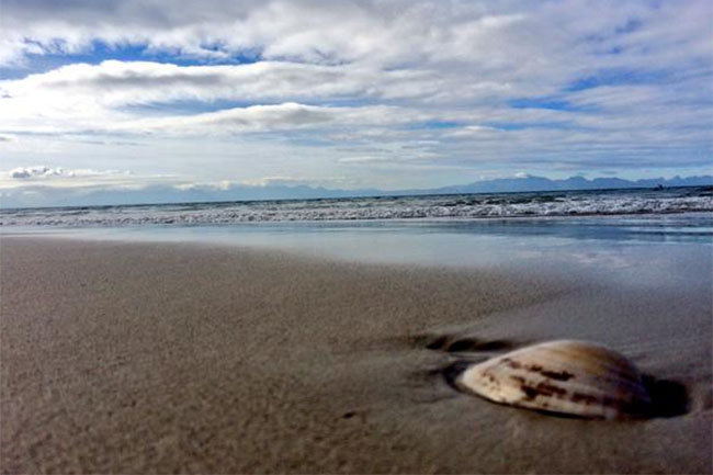 CITY WARNS RESIDENTS NOT TO EAT WASHED UP MUSSELS