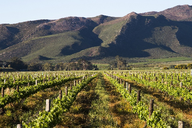5 INTERESTING WINE FARMS YOU MAY NOT HAVE HEARD OF