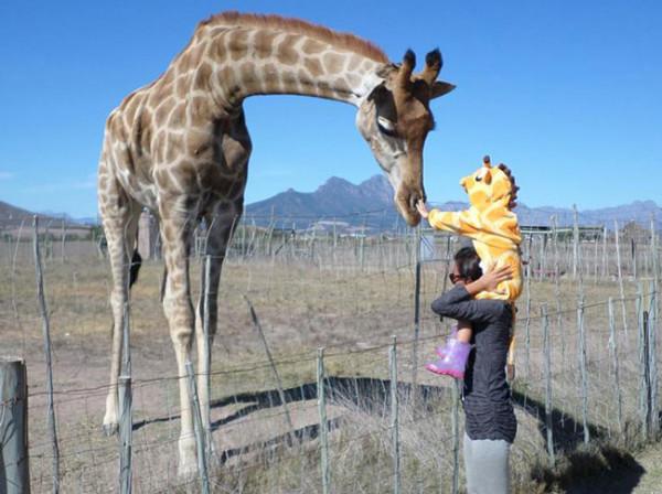 KIDS-giraffe
