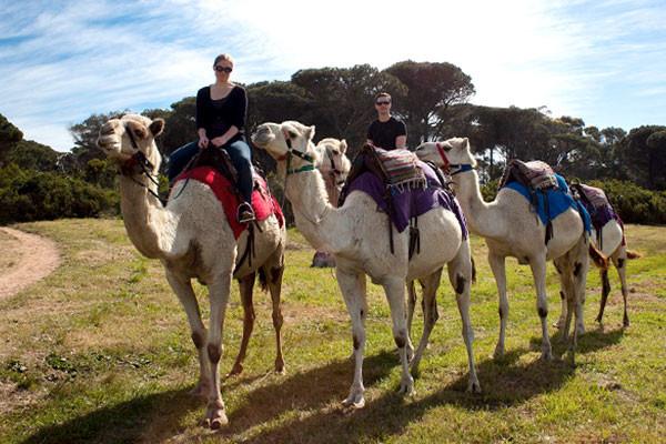 camel-riding-