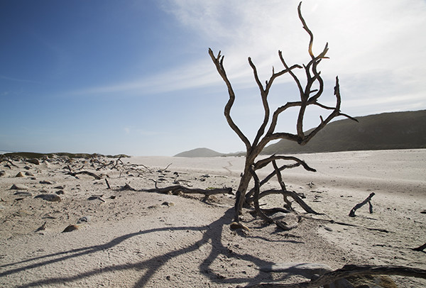 cape point 6