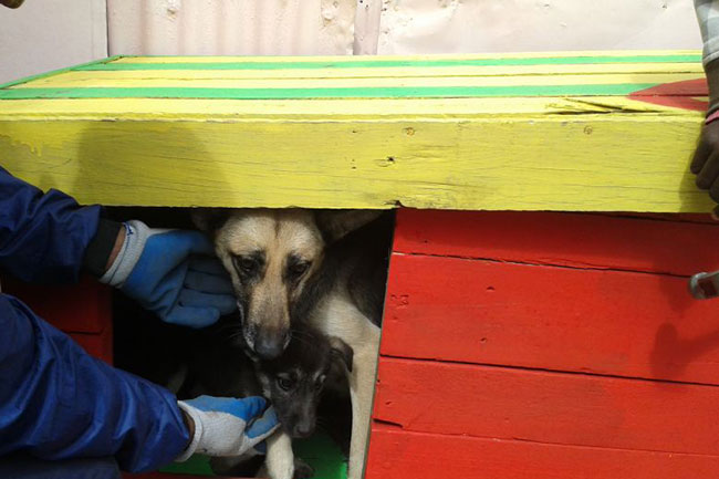HELP OUR FURRY FRIENDS WITH SA. MAST