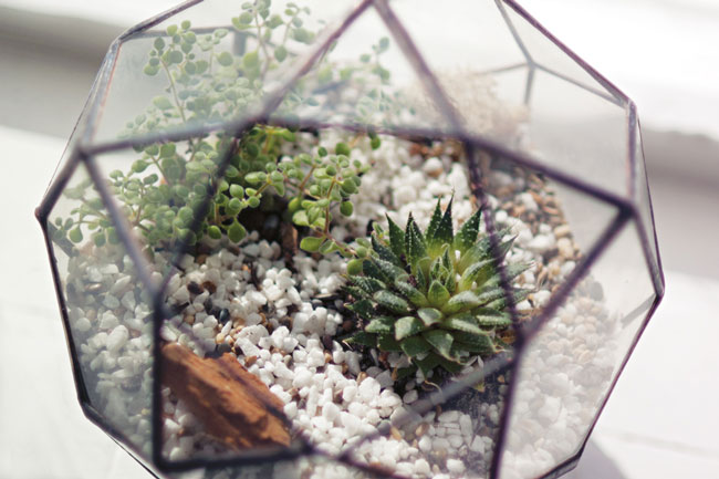 CUSTOM LIGHTS AND TERRARIUMS BY CINDERWOOD