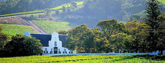CONSTANTIA VALLEY GRAPE RUN