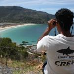 shark spotters