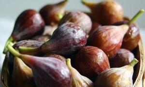 kloovenburg fig picking