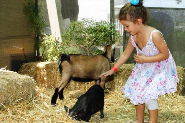 Lea-Goebel-enjoying-the-petting-zoo.