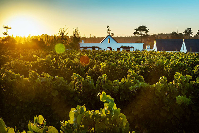 WILDERNESS TO PLETT: WINES STOPS IN THE STUNNING GARDEN ROUTE