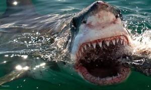 supreme sharks
