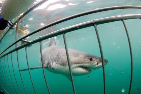 underwater-cage