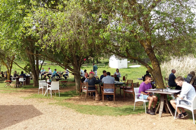 THE BEST OF THE DURBANVILLE WINE ROUTE