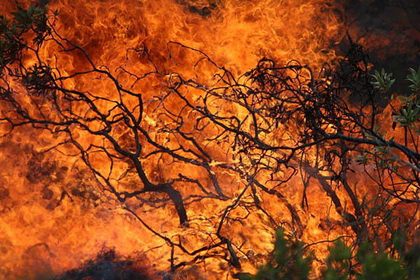 controlled-burns-3