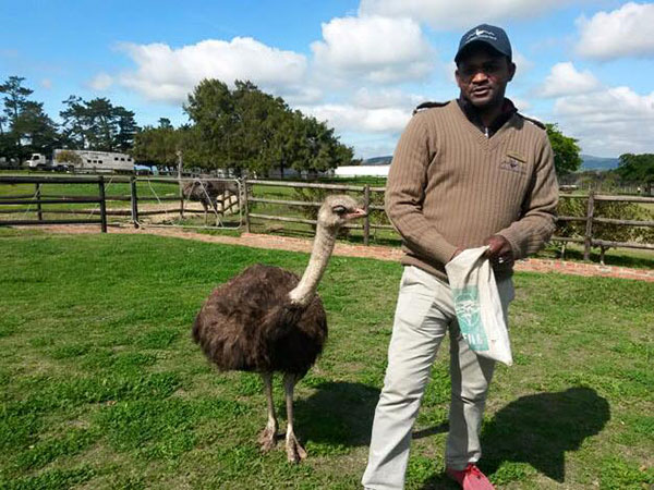 Ostrich-farm-9