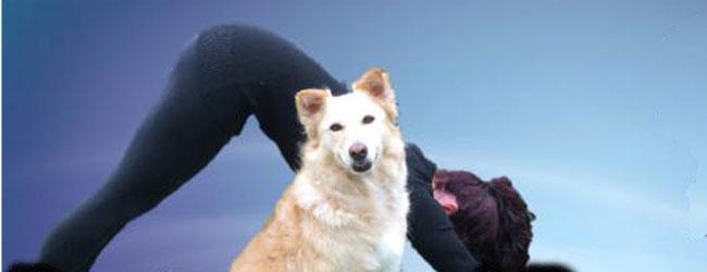 DOWNWARD DOG FOR DOGS