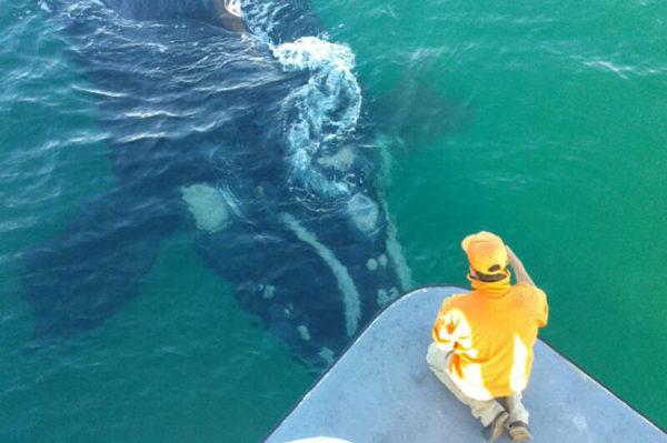 whale-watcher---FI
