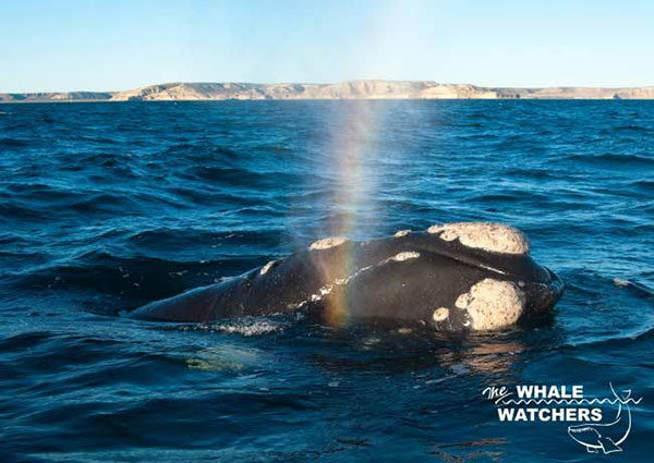 whale-wathcers-3