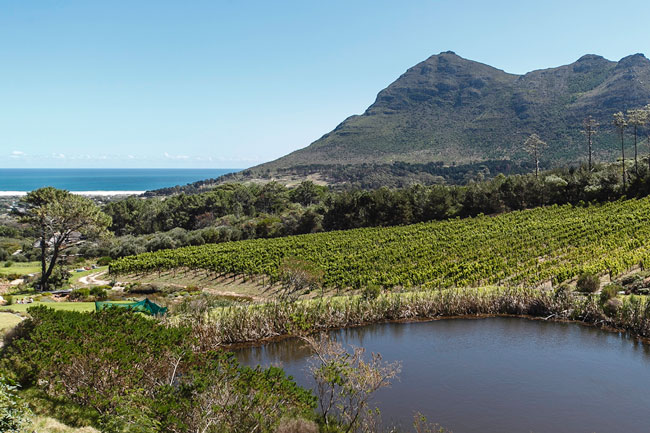 TAKE IT EASY AT CAPE POINT VINEYARDS