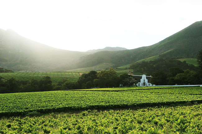 GROOT CONSTANTIA WINS TOP WINE AWARD