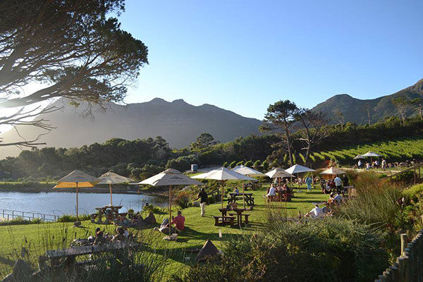cape-point-vineyards-picnic