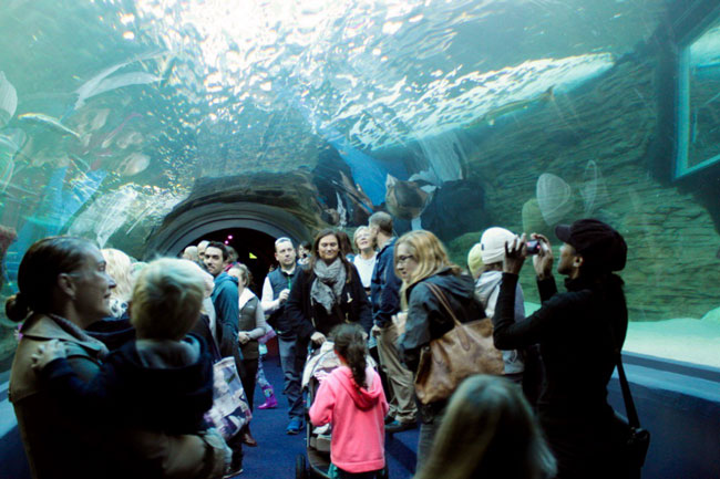 TWO EXCITING NEW ATTRACTIONS OPENS AT TWO OCEANS AQUARIUM