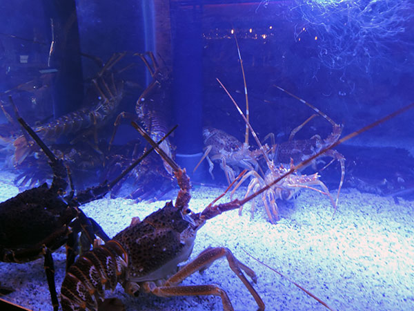 Burger-and-Lobster-tank